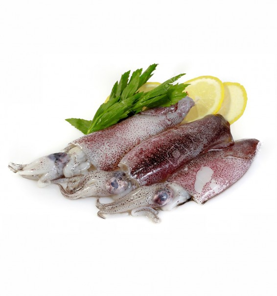 10233740-Fresh-Calamari-with-Lemon-Stock-Photo-squid-cuttlefish