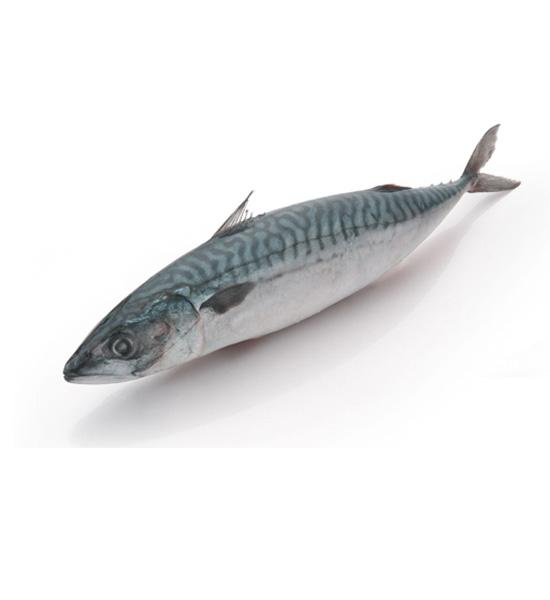 Cá SaPa nhật