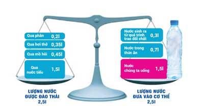 Cân bằng lượng nước cho cơ thể - Thực phẩm An Tâm