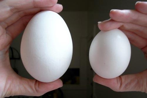 Trứng Ngỗng - Thực phẩm An Tâm
